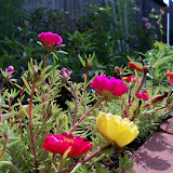 Gardening 2010, Part Two - 101_2388.JPG