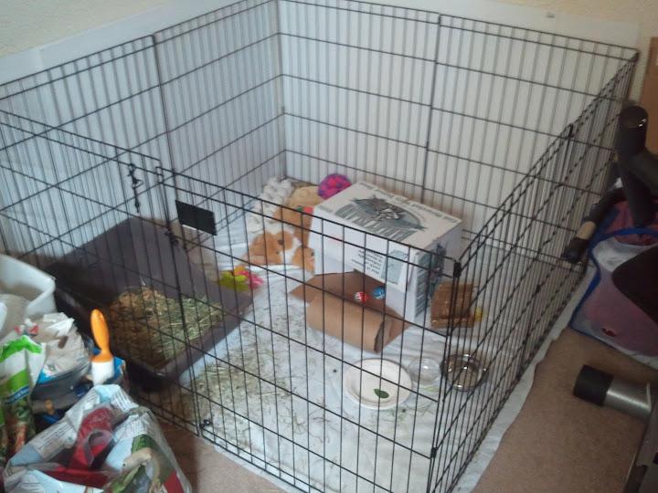 House Rabbit Cage Flooring - Flooring Designs
