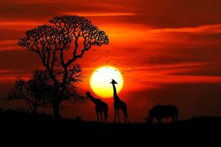 Magical-sunset-