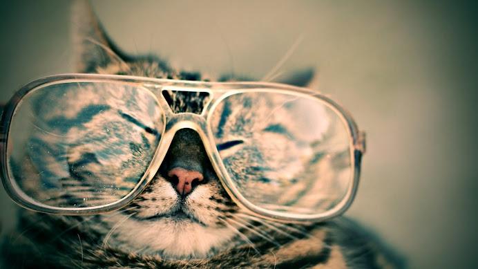 Katzen Brille - Google+