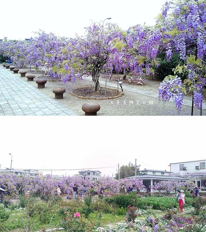 3 紫藤咖啡園 2014