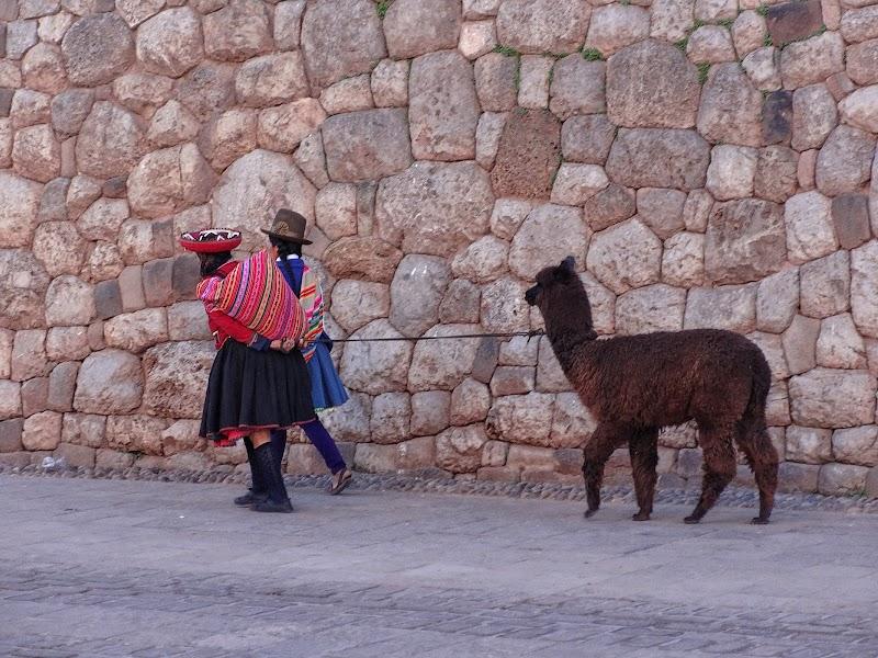 Alpaki na ulicy CuzcoJPG