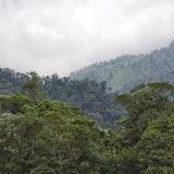 Forêt des nuages, environs de Los Cedros, 1400 m. Montagnes de Toisan, Cordillère de La Plata (Imbabura, Équateur), 18 novembre 2013. Photo : J.-M. Gayman