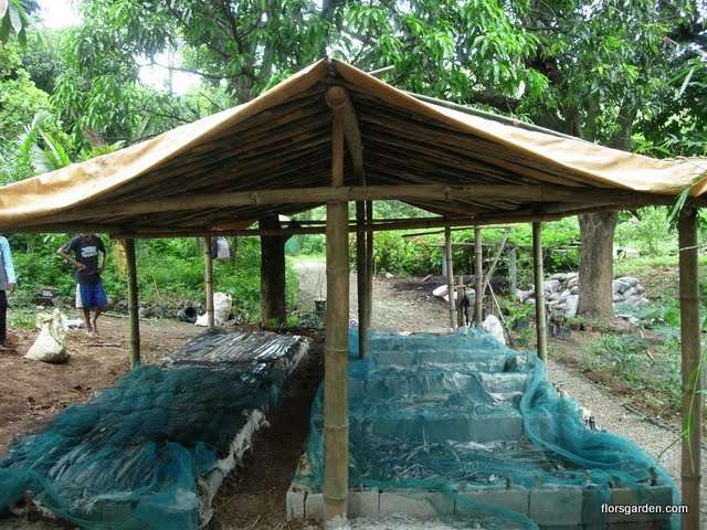Vermiculture - DSCN2435.JPG