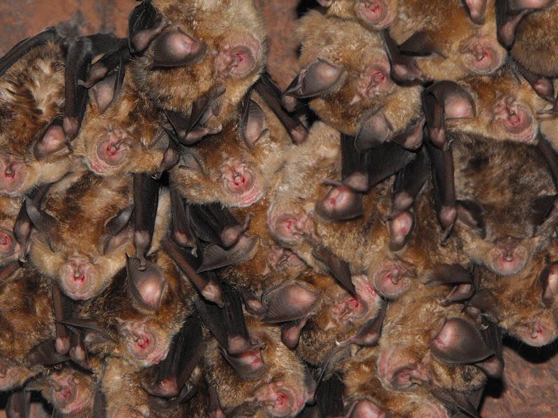 Bat mania di LucaMonego
