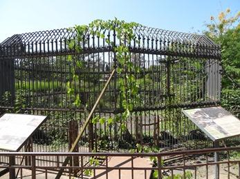 2018.08.21-006 première cage à ours du zoo