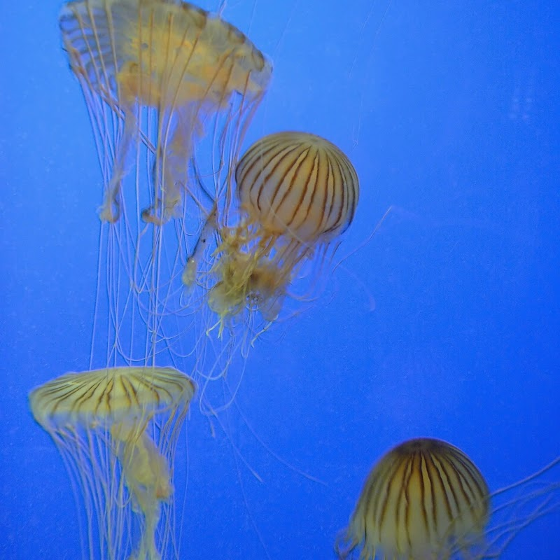 Aquarium_19.jpg