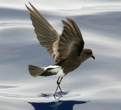 [bayoffundy.ca-SEABIRDS-40-Good-reaso%5B42%5D]
