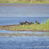 04-06-12 Myaka River State Park - IMGP9908.JPG