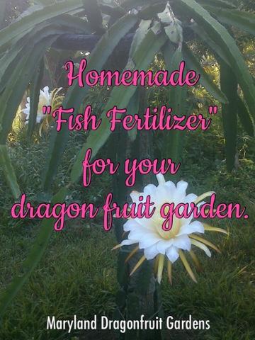 fish fertilizer or fish amino acid