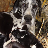 Graysee & her babies @ 5 days