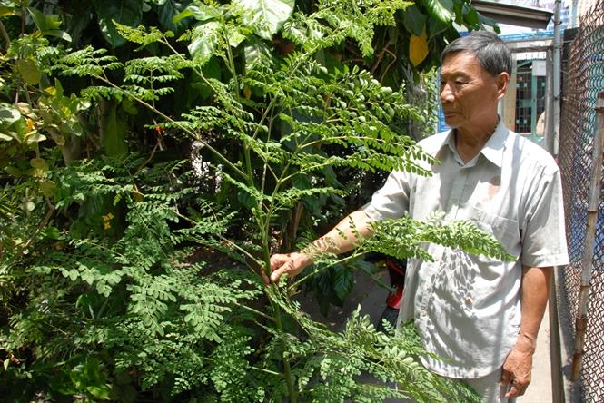Trồng cây dược liệu dưới tán rừng - 55b9c2ce84e2b