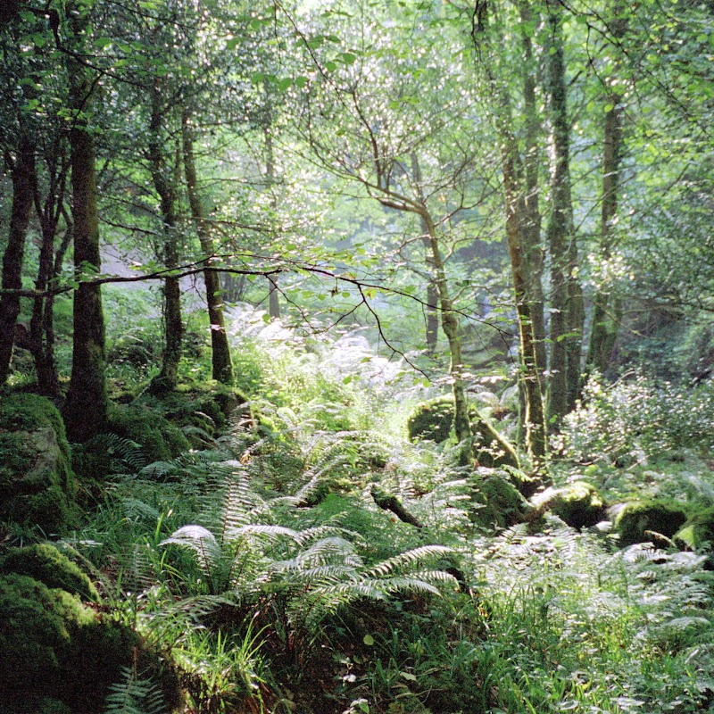 Ireland_07 Killarney Forest.jpg