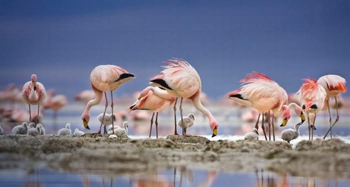 Imágenes de Aves divertidas o curiosas