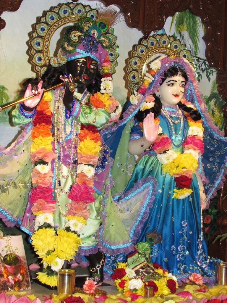 ISKCON New Goloka Deity Darshan 11 Dec 2016 (9)