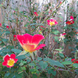 Gardening 2013 - 115_9988.JPG