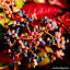 Herbst-Botanik