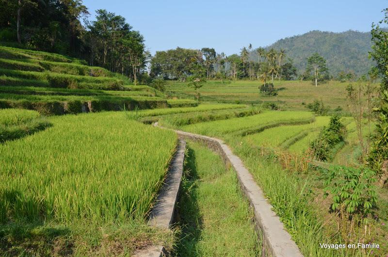 Sidemen rice fields