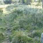 3K mile stone on Rennix Walk (269459)