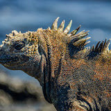galapagos - Galapagos_FB-105.jpg