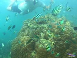 family trip pulau pari 090716 GoPro 23
