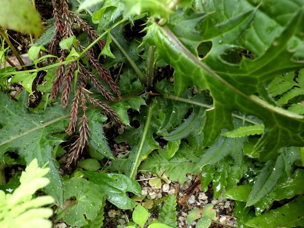 根生葉の様子