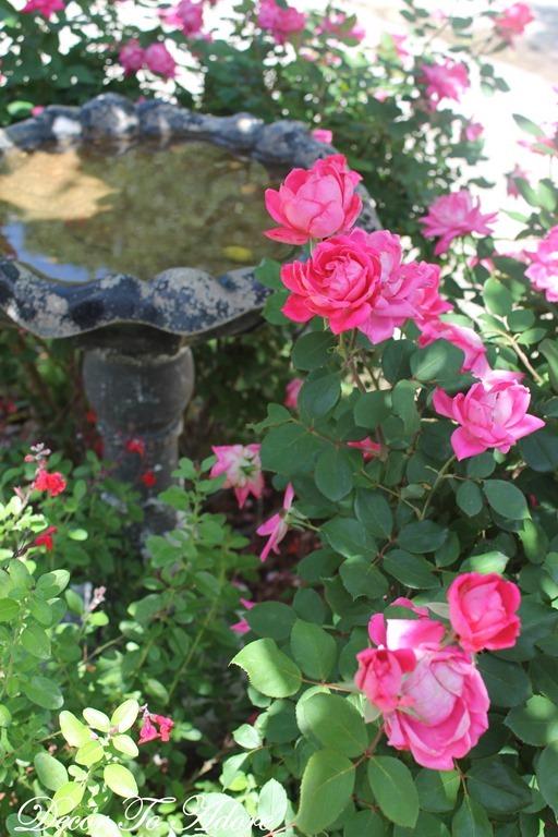 Garden 1074
