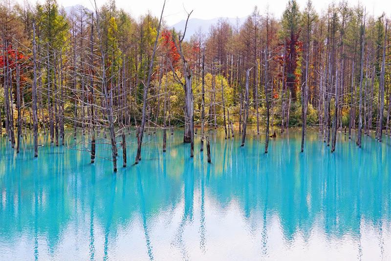 美瑛 青い池 写真4