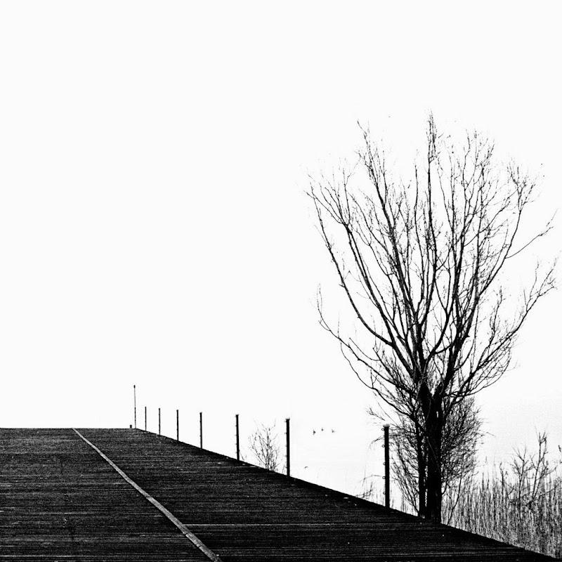 Astratto con trapezio e albero