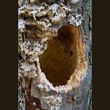 tree-hole_MG_8294-copy.jpg