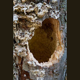 tree-hole_MG_8294-copy.jpg