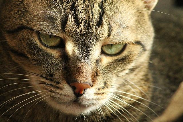 Cat 1225755 640