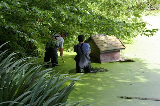 Pond Clearance - 17-07-2010 - pondamonium%2B%25284%2529.jpg