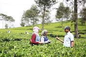 Menikmati Liburan Di Agrowisata Kaligua Berebes selatan Di Desa pandansari.