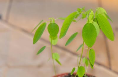 दुनिया की 5 सबसे अलग पेड़-पौधों की प्रजातियां