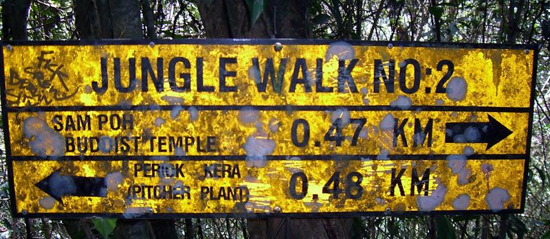 Wir auf dem Jungle-Walk