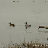 01-26-13 White Rock Lake - IMGP4357.JPG