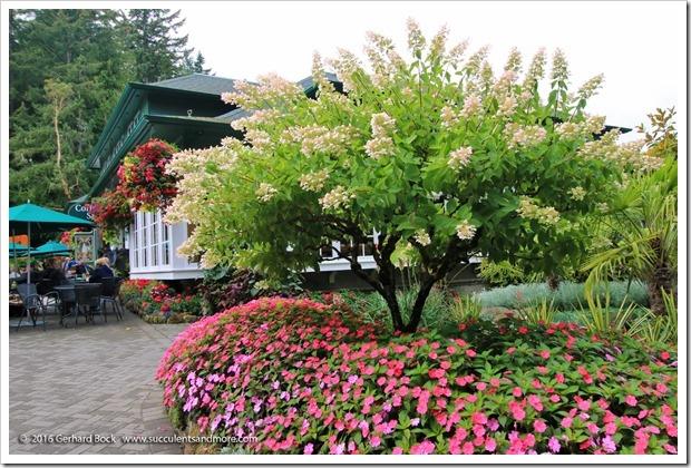 160906_Butchart_Gardens_0171