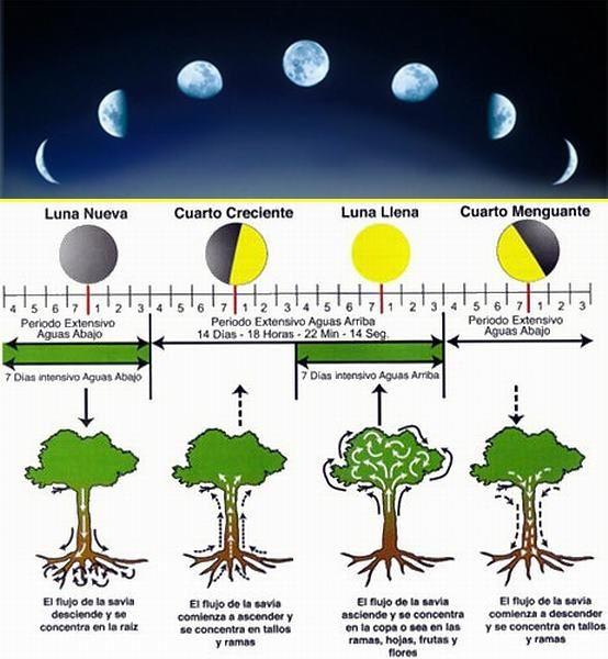 fases de la luna 3