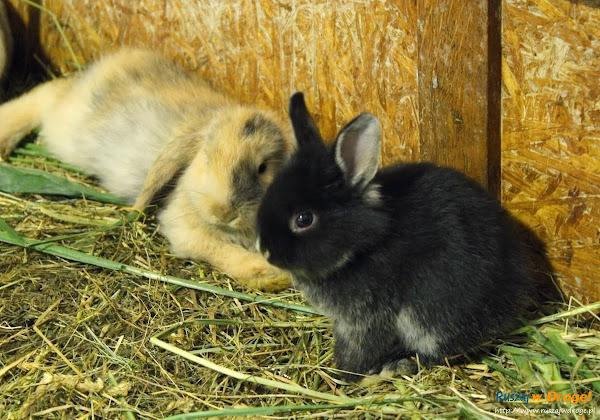 Tuchlino Park Egzotycznych Zwierzaków - króliczki