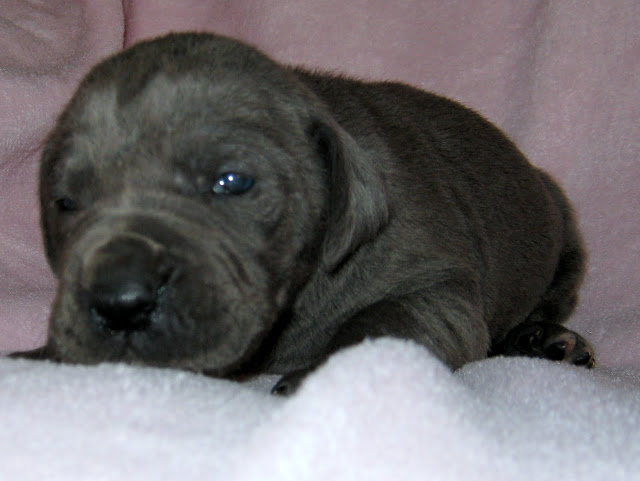 Stephanie's girl at 3 weeks