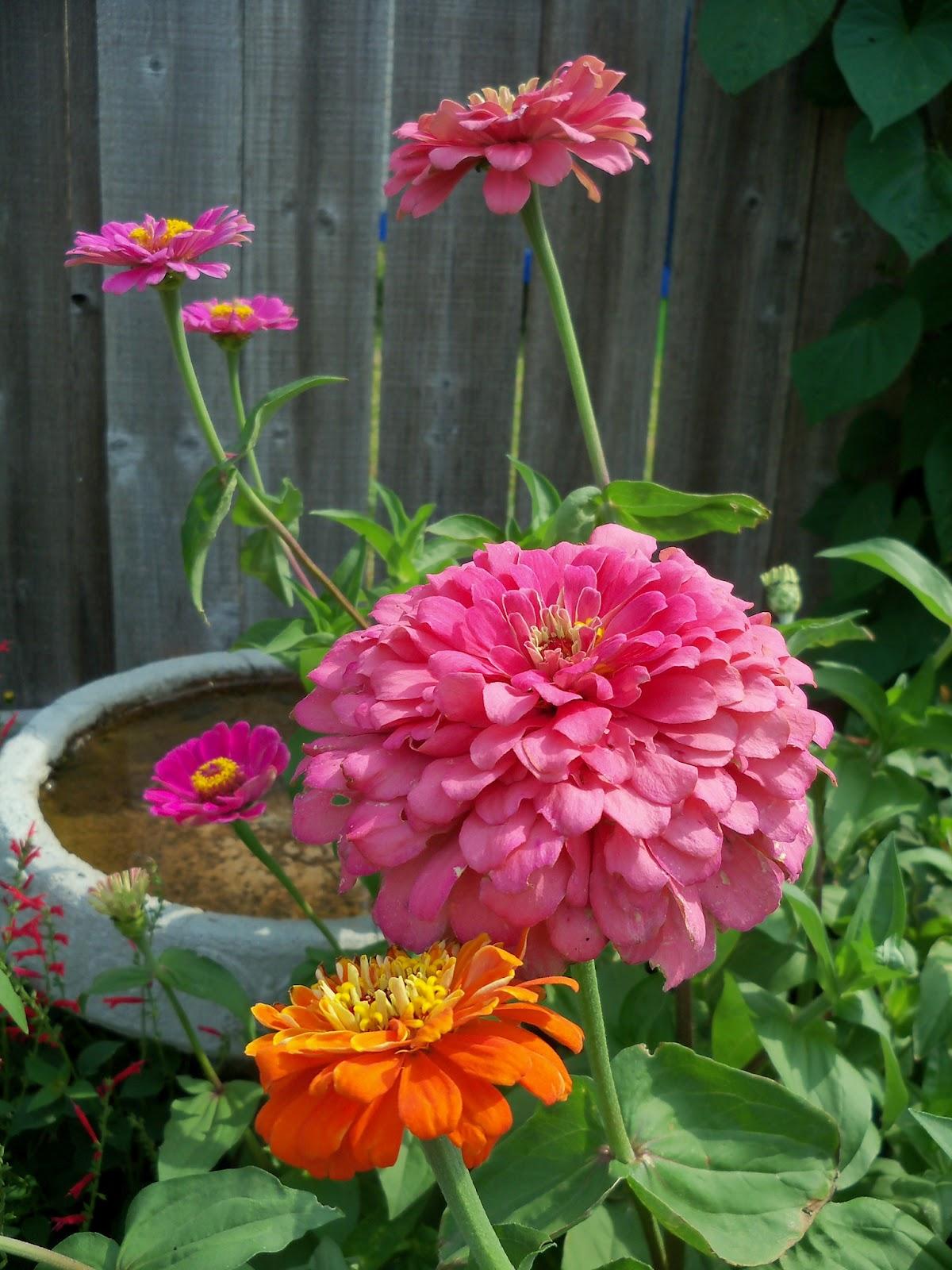Gardening 2011 - 100_8536.JPG
