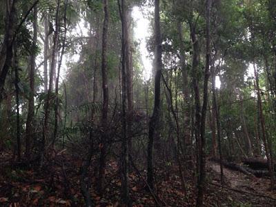 Hutan Rekreasi Tanjung Tuan