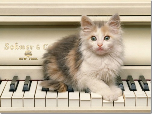 22 fotos de gats (8)
