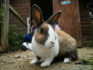 Favourite rabbit