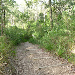 Well maintained tracks in Green Point Foreshore Reserve (389636)
