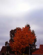 Photo: Træer, Koopmannsstræde, Silkeborg