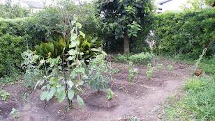 2010年6月29日の家庭菜園の様子