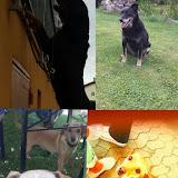 Bella Billy Hope i Ahil u novom domu - 14681825_1277479018949529_7198147594799379523_n.jpg