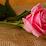 alaa mostafa's profile photo